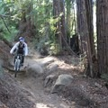 A few roots and drops keep you on your toes along the Enchanted Loop. - Wilder Ranch Trails