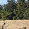 Forest meets grassland along the Long Meadow Trail.- Wilder Ranch Trails
