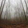Thick fog settling in the thick, old-growth forest that surrounds the trail. - Laurel Falls
