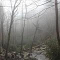 View from Upper Laurel Falls.- Laurel Falls