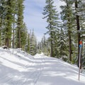 The trail is well used by snowmobiles. - Little Nash Snow Trail