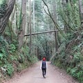 Walking along Aptos Creek Fire Road.- Forest of Nisene Marks State Park