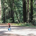 Family exploration near the Porter Family Picnic Area.- Forest of Nisene Marks State Park