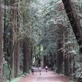 Aptos Creek Fire Road is popular with hikers, runners and bikers.- Forest of Nisene Marks State Park