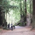 The park is a local favorite with mountain bikers.- Forest of Nisene Marks State Park