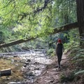 The Porter Trail drops down to Aptos Creek.- Forest of Nisene Marks State Park