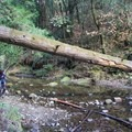 Exploring along Aptos Creek.- Forest of Nisene Marks State Park