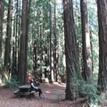 Enjoying the upward view in Forest of Nisene Marks State Park.- Forest of Nisene Marks State Park