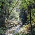 Another perspective on Aptos Creek.- Forest of Nisene Marks State Park