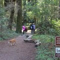 Forest of Nisene Marks is a favorite with dog owners where dogs are permitted on marked trails.- Forest of Nisene Marks State Park
