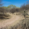 Fascinating mix of desert and riparian vegetation.- San Pedro River Trails