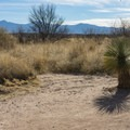 Open desert surrounds this oasis on both sides.- San Pedro River Trails
