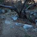 A few washes provide shade and some interesting obstacles.- Perimeter Trail