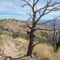 John Cooper Trail leads to Miller Canyon.- Cooper Loop