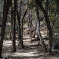 Super fun singletrack in the trees on Lower Miller Canyon.- Cooper Loop