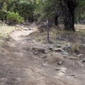 Most of Lower Brown Canyon is speedy singletrack.- Garden-Brown Canyon Loop