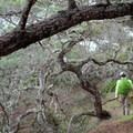 Hiking the loop trail.- Santa Rosa Island's Torrey Pines