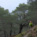 Switchback down the coastal hillside through the Torrey pine grove.- Santa Rosa Island's Torrey Pines