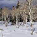 Beautiful surroundings. - Bear Claw Yurt