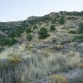 The trail ascending Lost Mine Peak.- Lost Mine Trail
