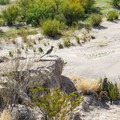 Roadrunner spotted near the trail.- Boquillas Canyon Trail