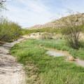 Marshy ground near the river creates unique habitat in the desert.- Boquillas Canyon Trail