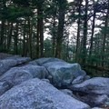 Summit of Mount Rogers.- Grayson Highlands Backpacking Loop