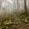 Mount Rogers Trail.- Grayson Highlands Backpacking Loop