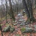 Appalachian Trail.- Grayson Highlands Backpacking Loop