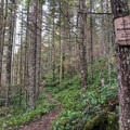 The early parts of the trail are often free of snow.- Excelsior Pass Snowshoe