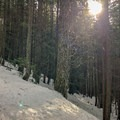 The trail zigzags through the forests on the lower portion of the trail.- Excelsior Pass Snowshoe