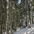 The grade increases as you ascend, and it can be harder to follow the sparse trail markings.- Excelsior Pass Snowshoe