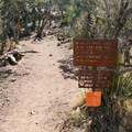 Beginning of the spur trail to Emory Peak from the top of Pinnacles Trail.- Emory Peak via Pinnacles Trail