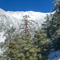 Looking toward Baldy Bowl.- Mount Baldy via Register Ridge