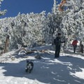 Dogs are welcome on this trail.- Mount Baldy via Register Ridge