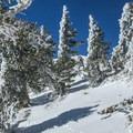 Nearing the ridge.- Mount Baldy via Register Ridge