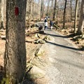 Lower Falls Trail is much easier and smoother than Cliff Trail.- Cunningham Falls