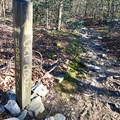 The trail is well marked.- Cat Rock Mountain via Old Misery Trail