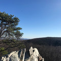 A view from the top of Cat Rock. Hawks love to play in the wind.- Cat Rock Mountain via Old Misery Trail