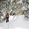 The forest is stunning in winter.- Zoa Peak
