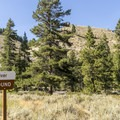 The Salmon River Campground has sites  on both sides of the highway.- Salmon River Campground