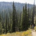 Wildflowers and views.- Titus Lake Trail