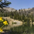 Late summer wildflowers.- Titus Lake Trail
