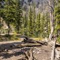 Backcountry campsite above Titus Lake.- Titus Lake Trail