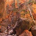 The lighting in the bottom of Spring Creek Canyon is incredible. - Spring Creek Canyon