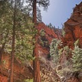 This large and open area is two-thirds of the way up Spring Creek Canyon. Note the enormous pine trees.- Spring Creek Canyon