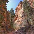 Spring Creek Canyon.- Spring Creek Canyon