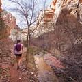 Spring Creek.- Spring Creek Canyon
