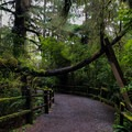 Gravel paths that are easy to navigate make this the perfect place for children and the elderly to experience the wonders of the redwoods. - Trees Of Mystery