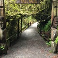 Trail of Tall Tales is a short walk through carved redwoods depicting the life of Paul Bunyan.- Trees Of Mystery
